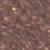 SES-19